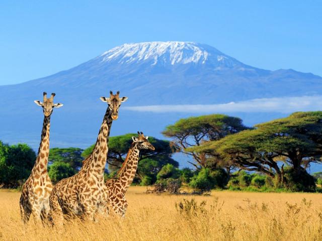 Vivan una luna de miel llena de aventuras en Tanzania