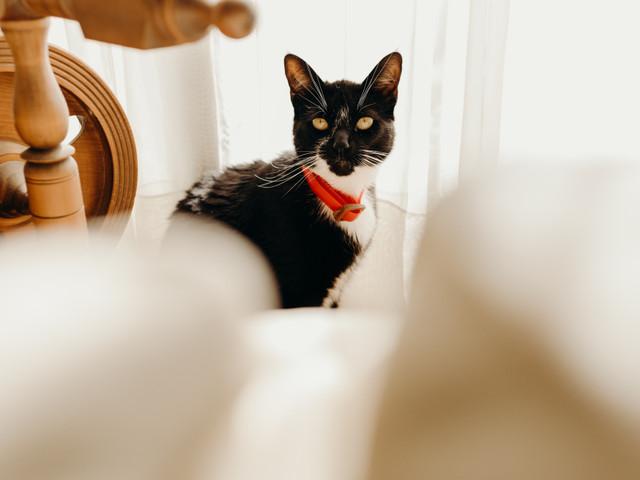 6 ideas para incluir a su gato en el matrimonio