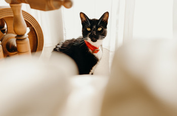 6 ideas para incluir a su gato en el matrimonio