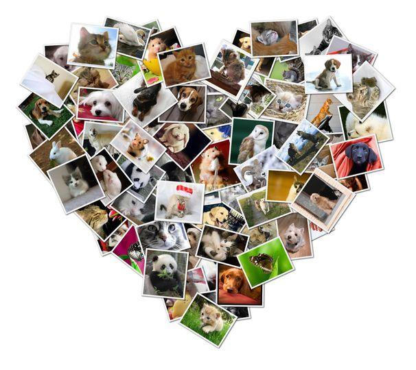 Amor en cada fotografía
