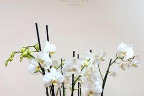Espacio Floral