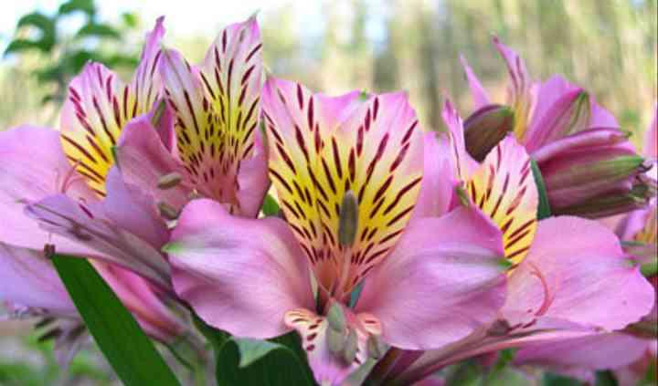 Variedad en flores