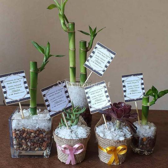 Mix Lucky  Bamboo y Suculentas