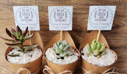 Cactus Suculovers