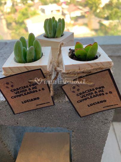 Macetas madera con suculentas