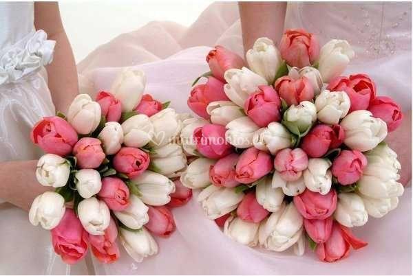 Tulipanes rosa y blanco