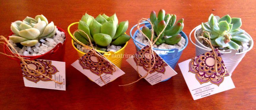 Sedum - Cactus y suculentas