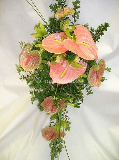 Anthurium y Orquídeas