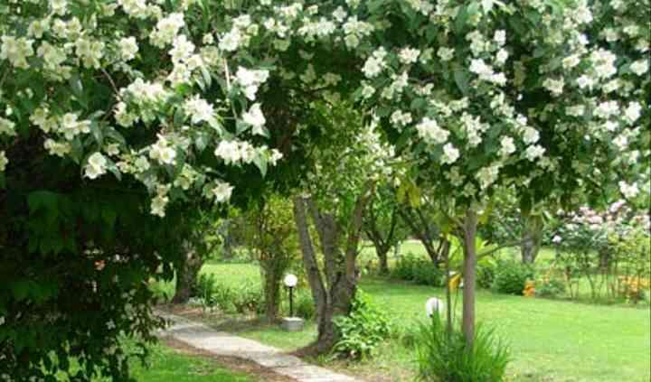Sendero en el jardín