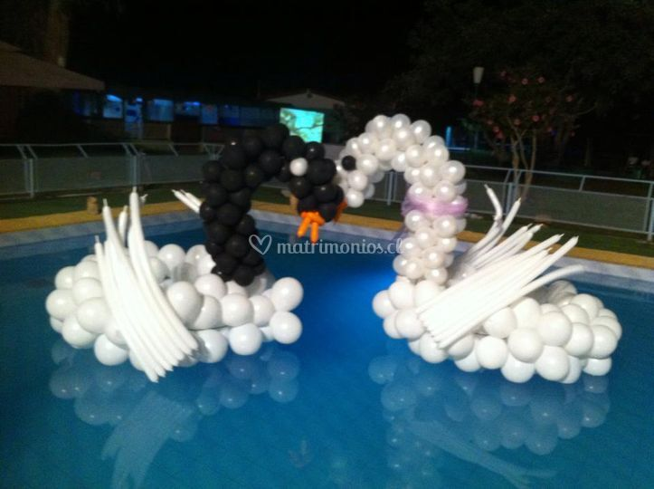 Cisnes en piscina