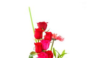 Flores Quillota