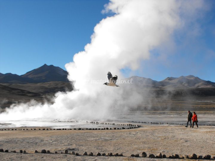 Tatio espectacular