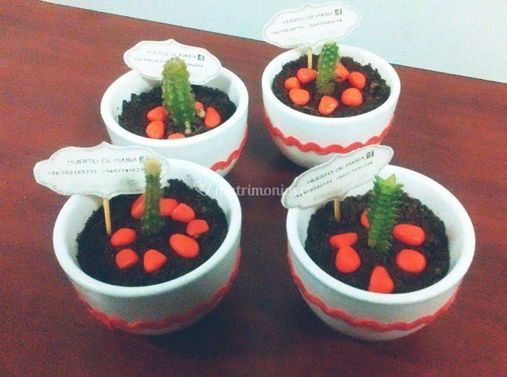Cactus para recuerdo