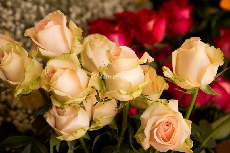La Rosa Florería