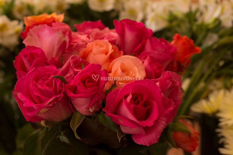 Rosas mini