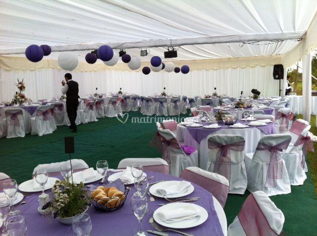 Color violeta de carpetas lazo
