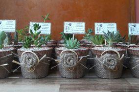Aitue Cactus y Suculentas