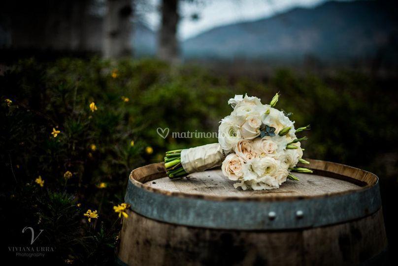 Viviana Urra Photography