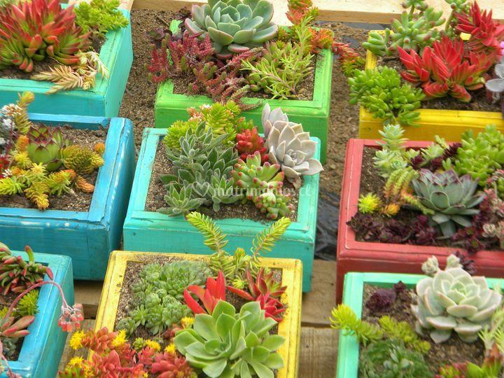 Presentaciones de primer nivel de vivero laguna verde fotos for Viveros en curico