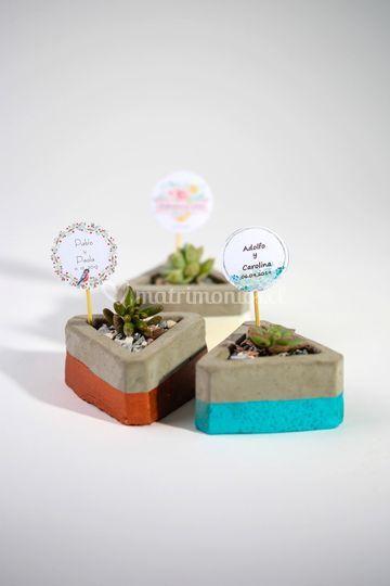 Cactus en macetero de cemento