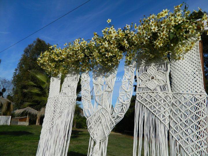 Flora Mimosa Decoración