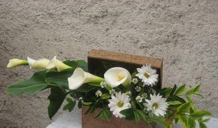 Florería Masqflores