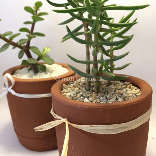 Plantiquería