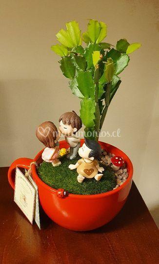 Suculentas y Cactus De Jardines y Hadas