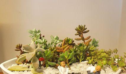 Suculentas y Cactus De Jardines y Hadas 1
