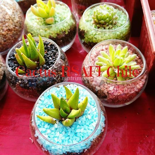 Cactus RSAFI