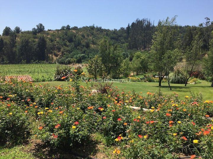 Parque y viñedos