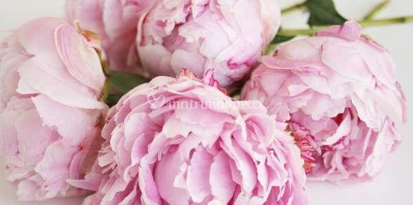 Luz M. - Flores a Domicilio