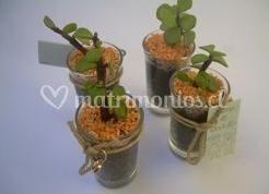 Un sinfín de cactus