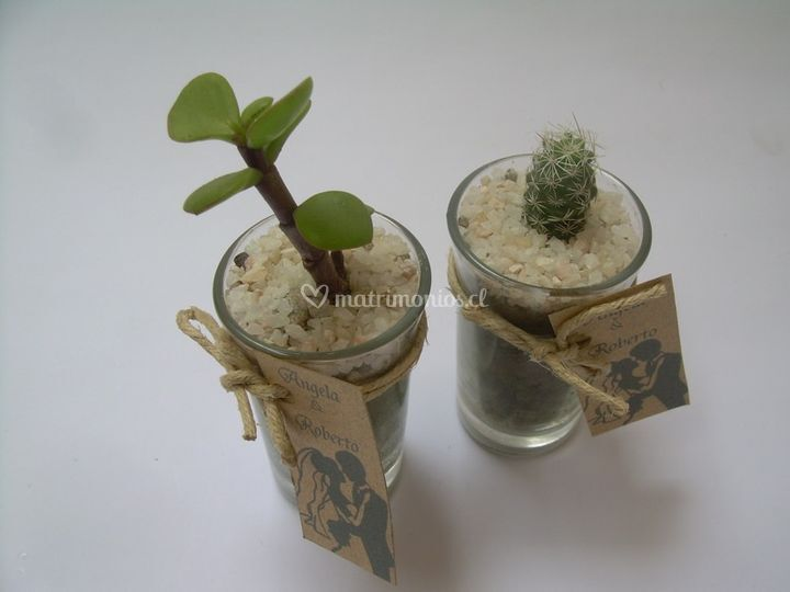 Variedades de cultivo cactus fotos for Cactus variedades fotos