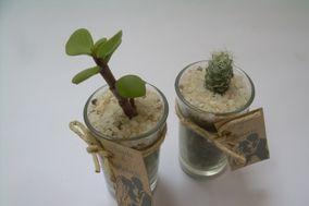 Cultivo Cactus