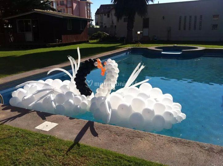 Cisnes para eventos