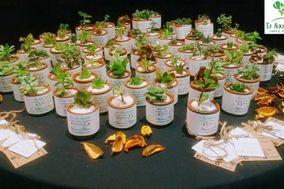 Cactus Tu Souvenir