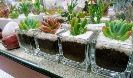 Cactus Tu Souvenir 1