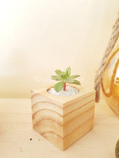 Mini maceta de pino