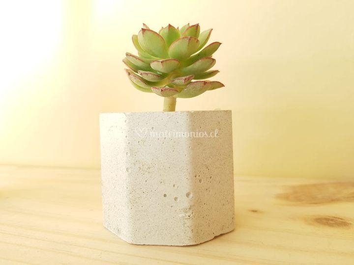 Mini maceta de cemento