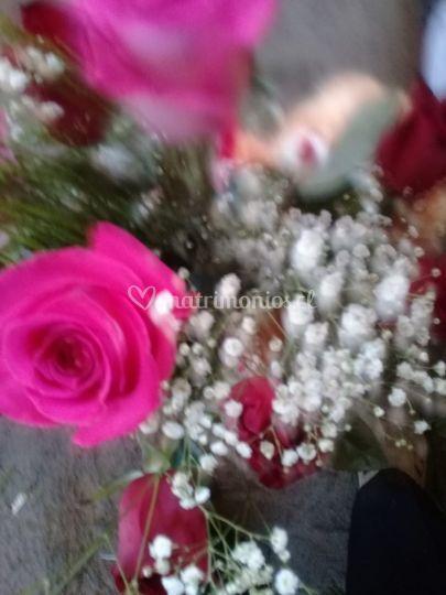 Rosas con ilusiones