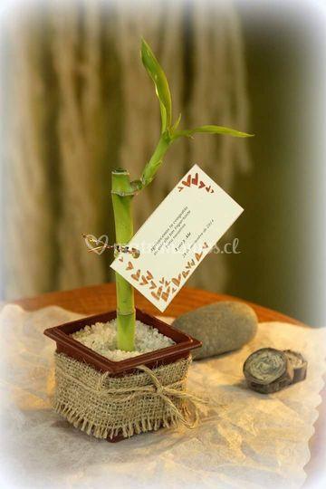 Varita Lucky Bamboo