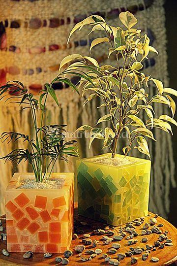 Velas con plantas