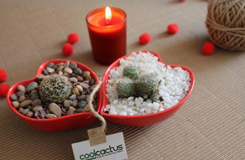 Corazones mini de cactus