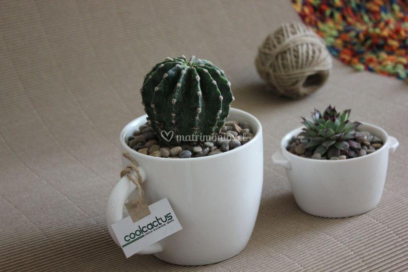 Cactus de recuerdo