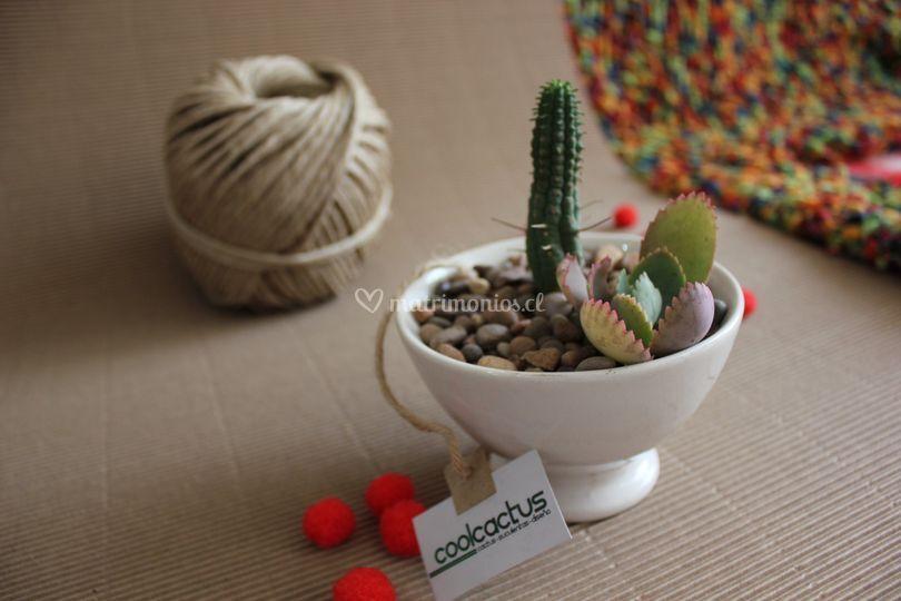 Cactus para eventos
