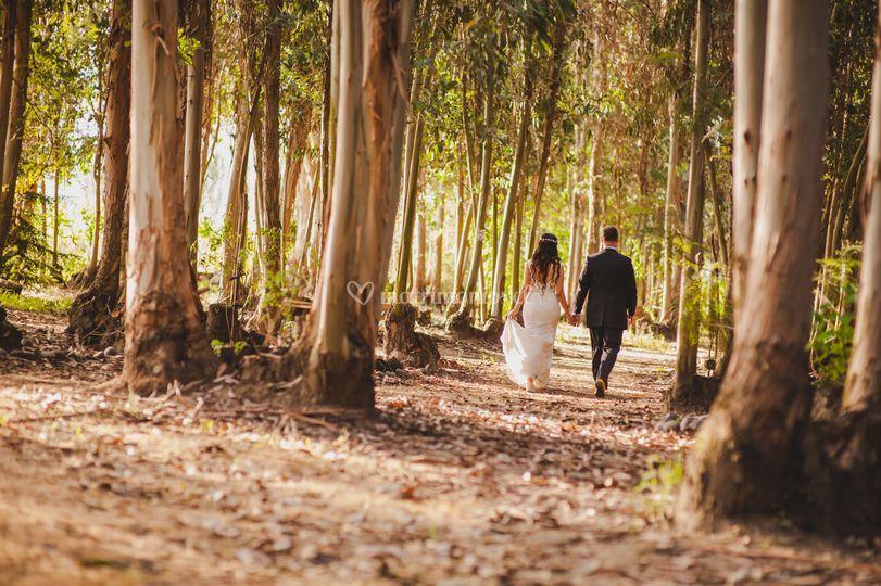Recién casados en el bosque