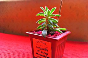 Ecogreen Mis Plantitas
