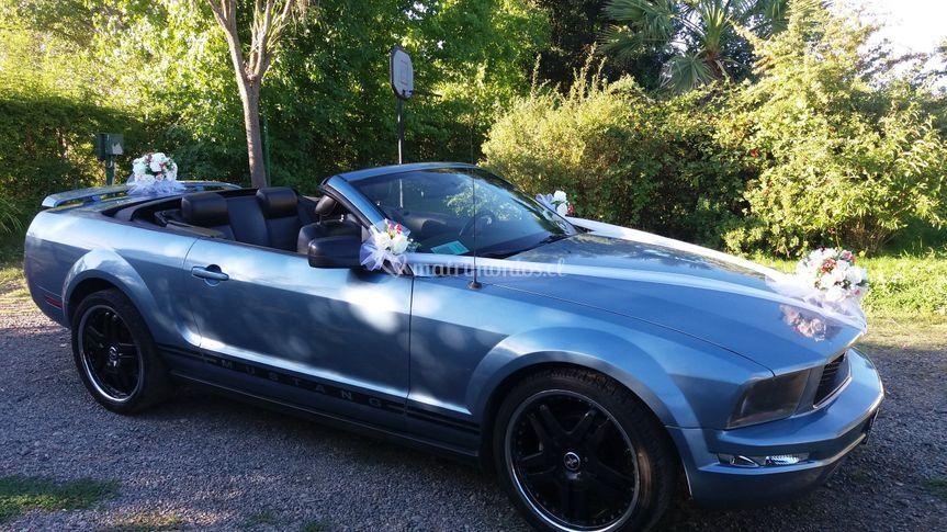Mustang Chillan