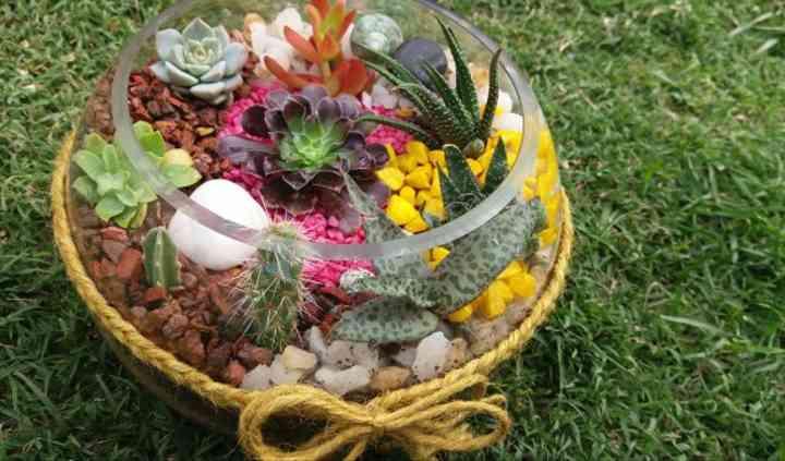 Cactus e Ideas